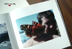 Mariposa argentina posando divina